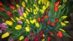 Тюльпаны.
