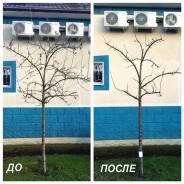 Обрезка плодовых деревьев Фрязино - Щёлково - Ивантеевка