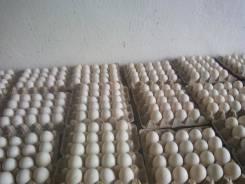 Яйцо утиное инкубационное