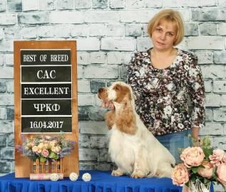 Стрижка собак, районы Первая Речка и 100-летие, опыт работы 18 лет.