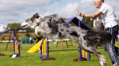 Спорт с собаками-аджилити в Уссурийске