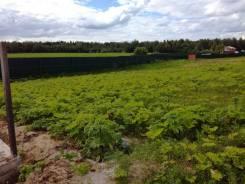 Земельный участок 12.5 соток в посёлке Пестово-Семёновское. 1 249 кв.м., собственность, электричество, вода, от частного лица (собственник). Фото уча...