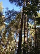 Продам лесной участок. 45 кв.м., собственность, электричество, вода, от частного лица (собственник)