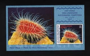 Теркс и Кайкос 1998 чистые, морская фауна