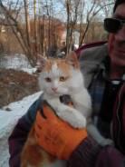 Котик, очаровашка, остался без дома