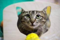 Милая мини кошка Алина