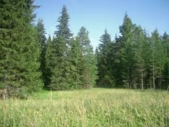 Две поляны в лесу у дер. Горки Ломоносовского р-на, тихое место. 273 000кв.м., собственность