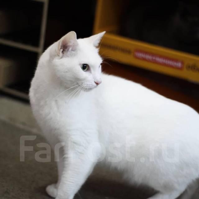 Кошечка Блонди