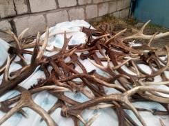 Дорого купим рога оленей , лосей , морала и другие . Предлагайте все !