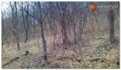 Купить земельный участок под строительство дома мыс. Вилкова, б. Емар. 1 000кв.м., собственность, электричество, вода, от агентства недвижимости (по...