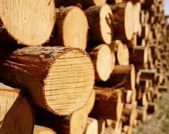 Сотрудничество лесозаготовительных компаниям.