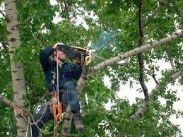 Спилить дерево. Вырубка деревьев. Удалить дерево. Вывоз. Цены