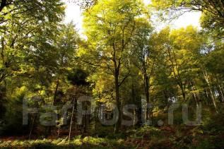 Пилка деревьев. Утилизация веток и стволов бесплатно.