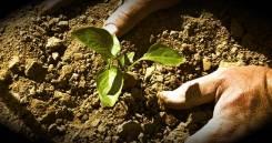 Уход за садом, газоном, розарием, клумбами