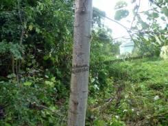 Расчистка участка от кустарника, вырубка (спил) деревьев. Покос травы.
