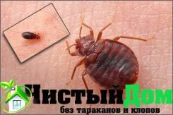 ЧистыйДом Без тараканов и клопов! Избавим от любых насекомых!