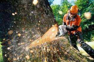 Спил деревьев , выкарчевка пней