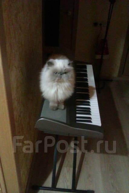Качественная и недорогая запись песен, вокала, инструментальной музыки