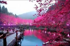 Япония. Токио. Экскурсионный тур. Парад цветов в Токио