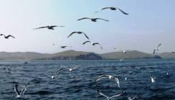 Летние туры на Байкал