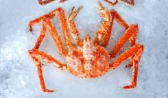 Ищу партнеров по сбыту морепродуктов