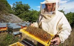 Пчеловод. ИП Жиляев. Тайга