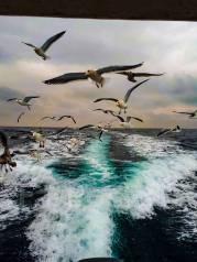 Катерные прогулки! Острова Путятина, Аскольд, Рейнеке, Рикорда Желтухина