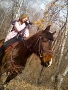 Интерактив с лошадьми на пикнике