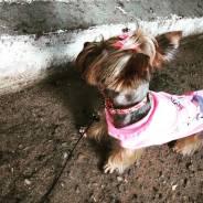 Инструктор по вязке собак