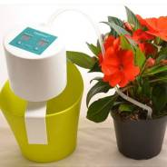 Наборы для выращивания растений.
