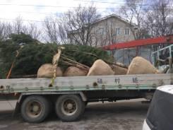 Профессиональная пересадка деревьев крупномеров.