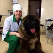 Врач ветеринарный. Высшее образование по специальности, опыт работы 3 года