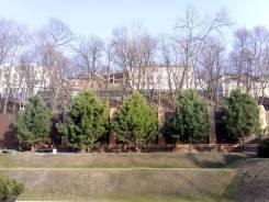 Пересадка , продажа и посадка деревьев , кустарников - любых размеров