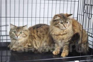 Стерилизация и кастрация кошек со скидкой 50%, только 26-27 мая!