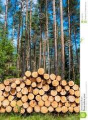 Вальщик леса.