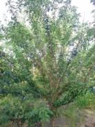 Дача на участке 8 сот. В садоводстве Галичный. От частного лица (собственник)