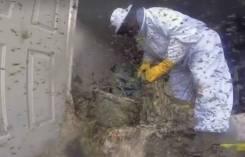 Уничтожение ос, шершней, пчел, комаров, мошек и других насекомых