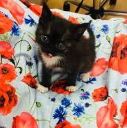 Кошечка Шанечка ищет свой дом! Это Чудо ЖДЕТ ВАС!