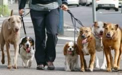 Выгул собак и др. животных