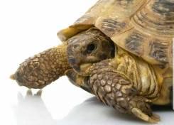 Черепахи.