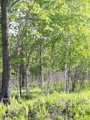 Продается земельный участок в районе Подгороденки. 600кв.м., собственность, от агентства недвижимости (посредник). Фото участка