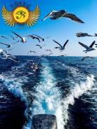 Загадки о. Путятина на катере из Владивостока 3400р 19, 25 июля