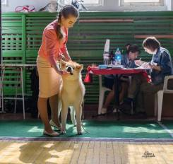 Хендлер Дубачинская София (подготовка и показ собак на выставках)