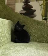 Котенок -девочка
