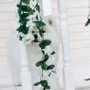 Самоедская собака. Под заказ