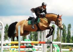 КСК Рекорд. Прогулки на лошадях. Профессиональное обучение верховой езде