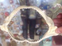 Зубы акулы малой Тайланд. Оригинал