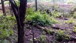 Земельный участок г. Уссурийск с. Каменушка,. 1 000кв.м., собственность, электричество, вода. Фото участка