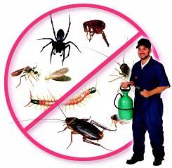 Профессиональное уничтожение насекомых