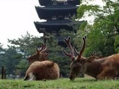 """Япония. Токио. Экскурсионный тур. Тур в Японию """"Токио-Осака"""", 6 дней"""